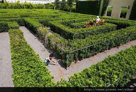 植物迷宫设计图